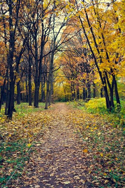 Aleja w parku jesienią. opadłe liście. smutny krajobraz jesień. Premium Zdjęcia