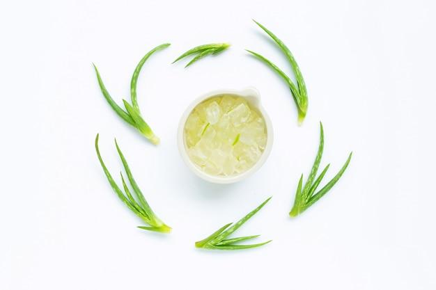 Aloes zwyczajny jest popularną rośliną leczniczą dla zdrowia. Premium Zdjęcia