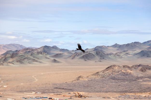 Amerykański Brown Orzeł W Locie Nad Mongolską Górą Premium Zdjęcia