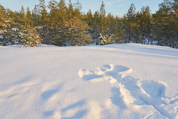 Anioł śniegu W Lesie Zimą W Słoneczny Dzień Premium Zdjęcia