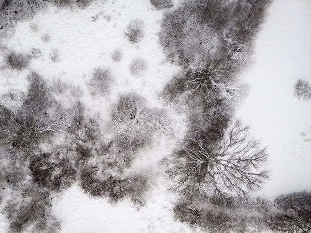 Antena Strzał śnieżna Ziemia Z Bezlistnymi Drzewami Darmowe Zdjęcia