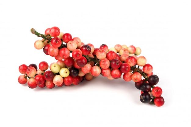 Antidesma thwaitesianum owoc na bielu Premium Zdjęcia