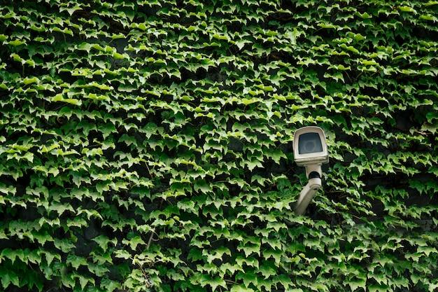 Aparat Bezpieczeństwa Na Zielono Premium Zdjęcia