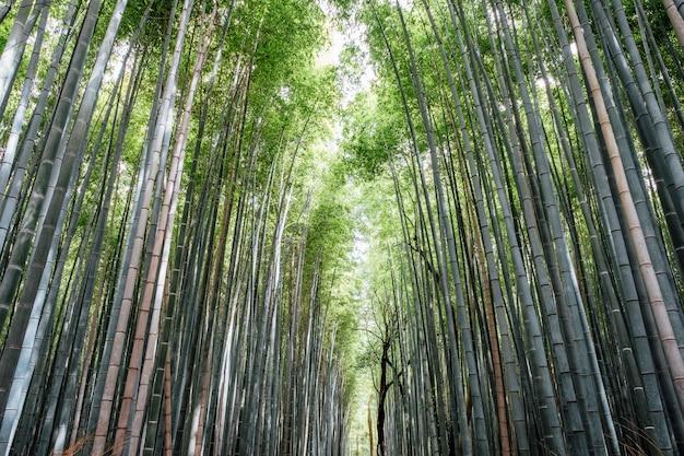 Arashiyama bamboo groves forest w japonii Darmowe Zdjęcia