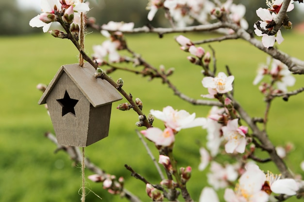 Asortyment Mały Drewniany Dom W Drzewie Darmowe Zdjęcia
