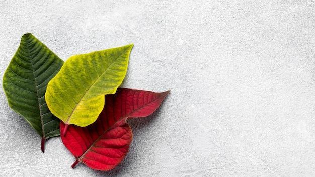 Asortyment Widok Z Góry Kolorowych Liści Z Miejsca Na Kopię Darmowe Zdjęcia