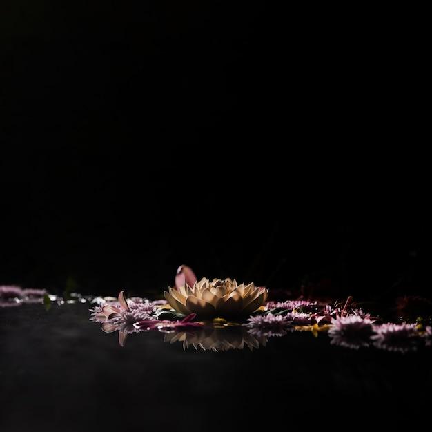Asortyment Wiosennych Kwiatów Koncepcja Kąpieli Darmowe Zdjęcia