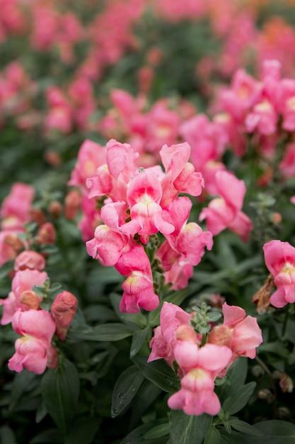 Asortyment Z Pięknymi Różowymi Kwiatami Darmowe Zdjęcia