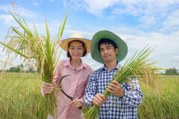 Azjatycki rolnik, mężczyzna i kobieta w kapeluszu różowo-niebieska koszula w paski trzyma złote ziarna irlandczyków i uśmiecha się radośnie na pięknych polach ryżowych Premium Zdjęcia