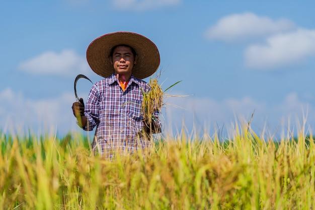 Azjatycki Rolnik Pracuje W Ryżu Polu Pod Niebieskim Niebem Premium Zdjęcia