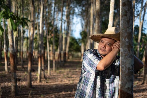 Azjatycki Rolnik Rolnik Niezadowolony Z Niskiej Wydajności Na Plantacji Drzew Kauczukowych Premium Zdjęcia