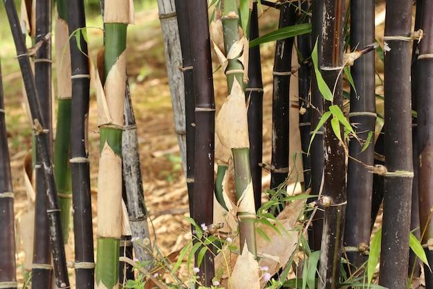 Bambus Premium Zdjęcia