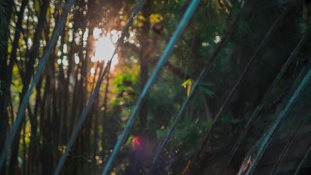 Bambusowy krajobraz lasu Darmowe Zdjęcia