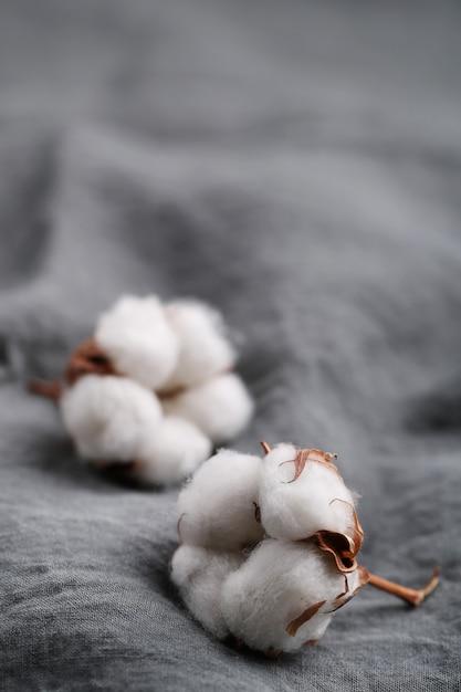 Bawełniane Kwiaty Darmowe Zdjęcia