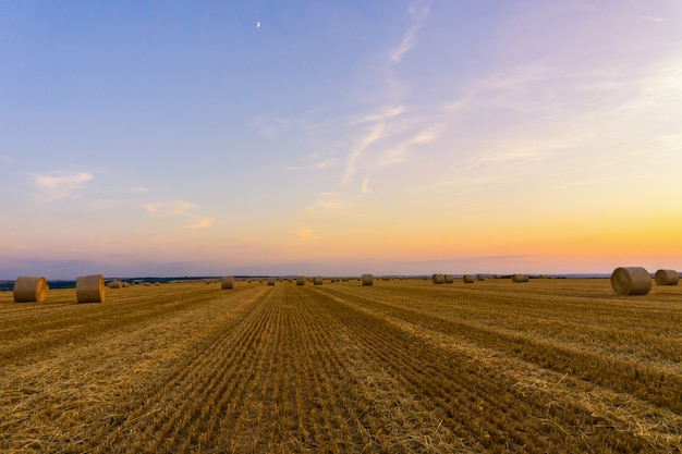 Bele słomy ułożone w polu o zachodzie słońca Premium Zdjęcia