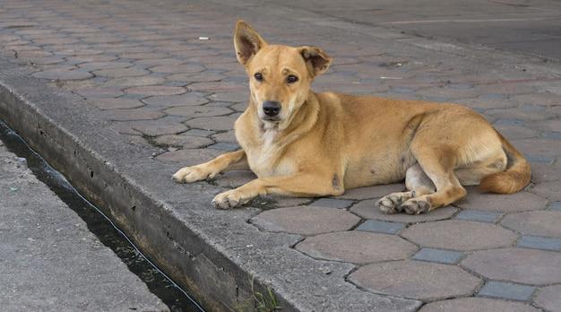 Bezdomny Bezpański Pies Siedzi Na Ulicy. Premium Zdjęcia