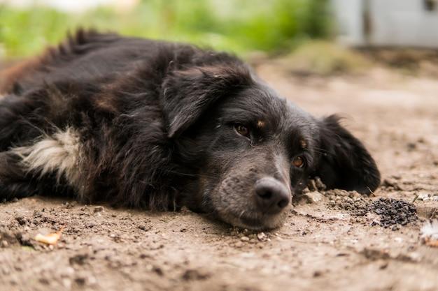 Bezdomny Czarny Pies Leży Na Zielonej Trawie I Patrzy W Kamerę. Premium Zdjęcia
