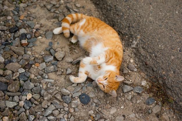 Bezdomny kot bez rasy w schronisku na spacer po ulicy Premium Zdjęcia