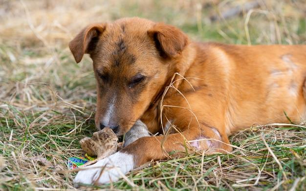 Bezdomny Pies Je Kość Na Ulicy Premium Zdjęcia