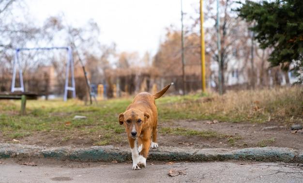 Bezdomny Pies Siedzi Na Ulicy. Premium Zdjęcia
