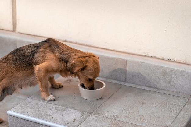 Bezdomny Piesek Zjada Jedzenie Z Miski Na Ulicy. Premium Zdjęcia