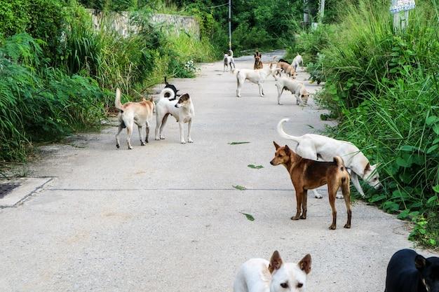 Bezpańskie psy czekają na jedzenie od ludzi, którzy przeszli przez pustynię Premium Zdjęcia