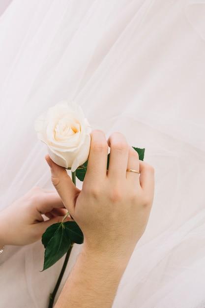 Biała Róża Z Welonem ślubnym Darmowe Zdjęcia