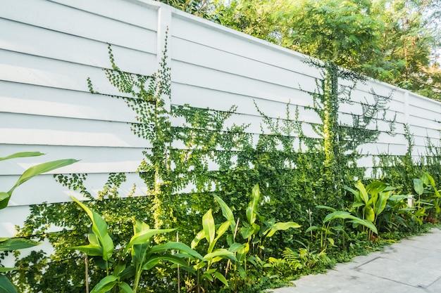 Biała ściana z drzewnym liściem na ścianie Darmowe Zdjęcia