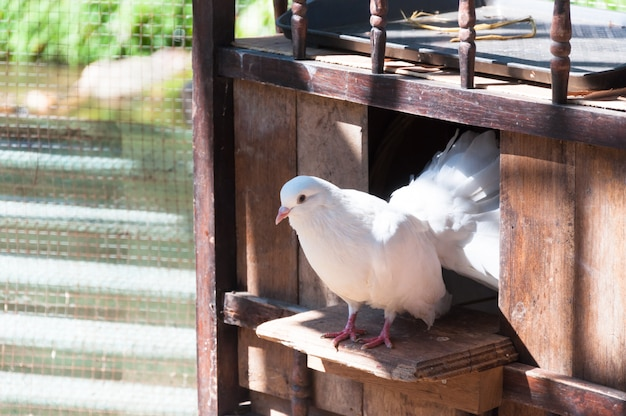Białe Gołębie Siedzą W Oknie Swojego Drewnianego Domu. Premium Zdjęcia