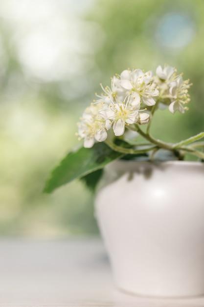 Białe Kwiaty Jarzębiny Z Bliska. Premium Zdjęcia