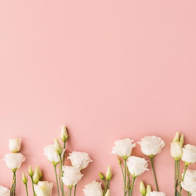 Białe kwiaty na różowym tle Premium Zdjęcia
