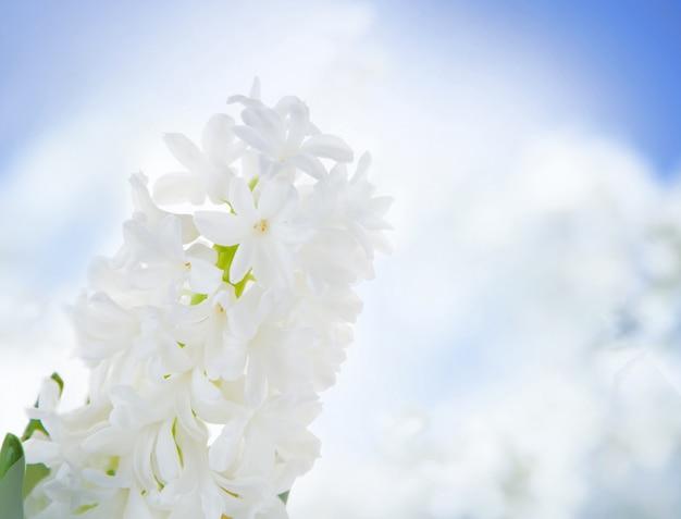 Biali Hiacyntowi Kwiaty Nad Niebem. Darmowe Zdjęcia