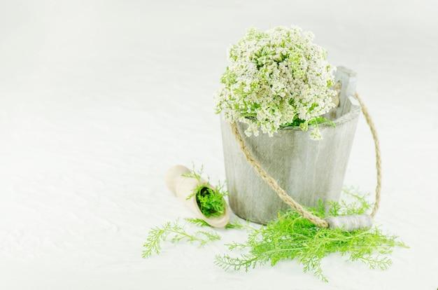 Biały krwawnik lub roślina lecznicza achillea millefolium. krwawnik roślin leczniczych Premium Zdjęcia