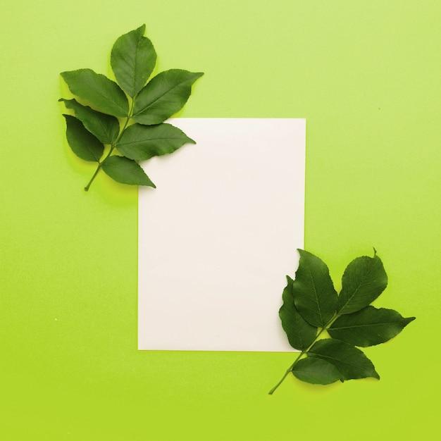 Biały Papier Z Liści Gałązką Na Zielonym Tle Darmowe Zdjęcia