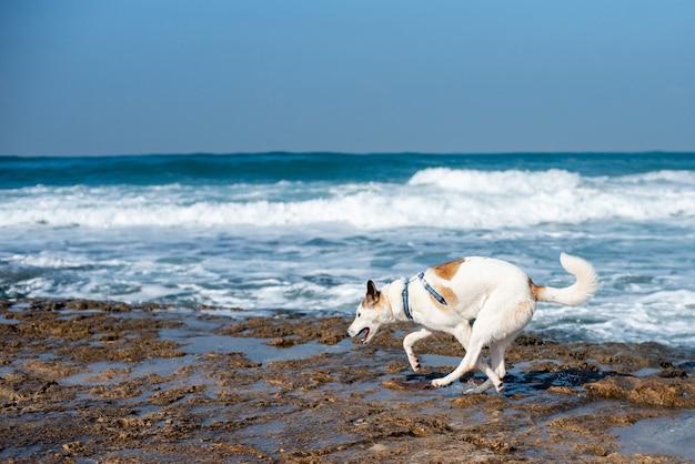 Biały Pies Biegnie Po Plaży Otoczonej Morzem Pod Błękitnym Niebem I światłem Słonecznym Darmowe Zdjęcia
