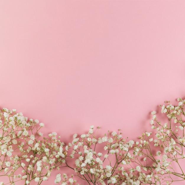 Biały świeży dziecko oddech kwitnie przeciw różowemu tłu Darmowe Zdjęcia