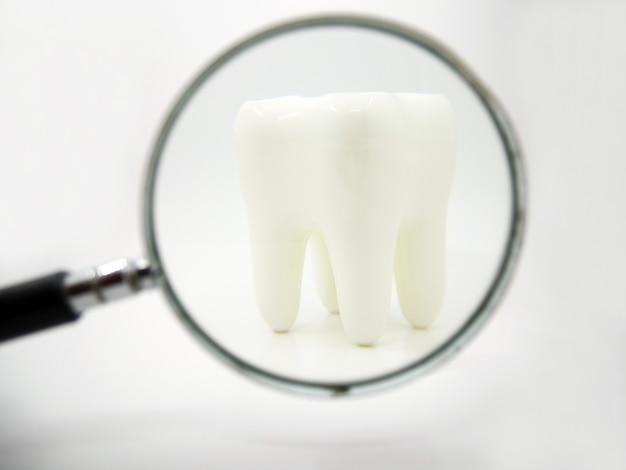 Biały Zdrowy Ludzki Ząb Na Białym Tle Z Lupą Premium Zdjęcia