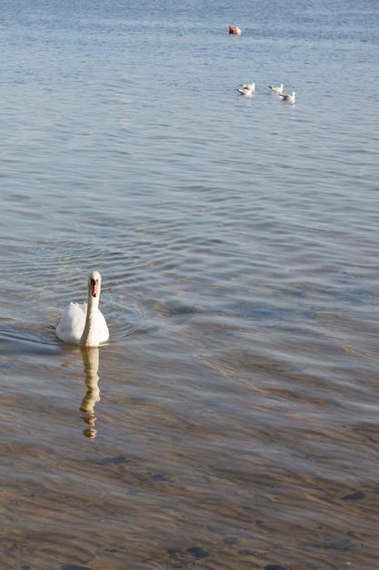 Biały Znak Ojca, A Za Nim Jego Rodzina Na Jeziorze Premium Zdjęcia