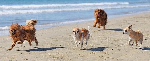 Bieganie psów na plaży Premium Zdjęcia