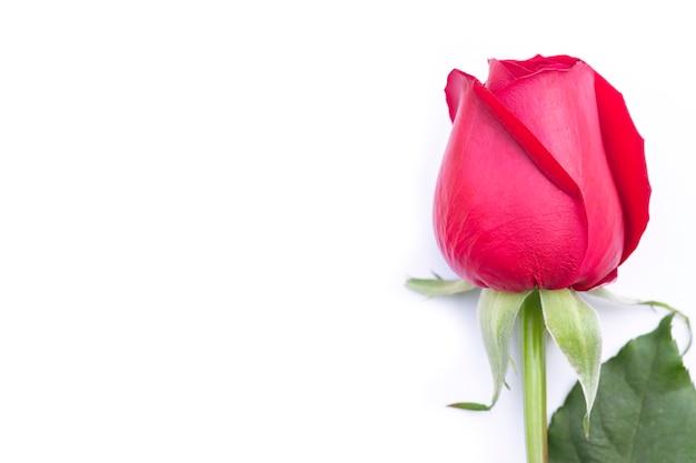 Bliska Czerwona Róża Z Miejsca Na Kopię Premium Zdjęcia
