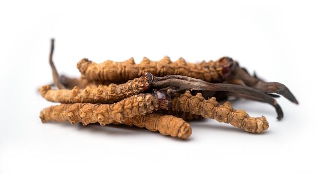 Bliska Ophiocordyceps Sinensis Lub Cordycep Grzybowy To Zioła. Premium Zdjęcia
