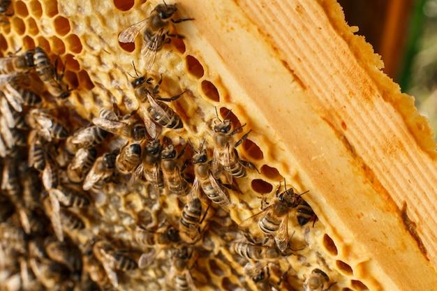 Bliska plaster miodu w drewnianej ramie z pszczół na nim. pszczelarstwo Premium Zdjęcia