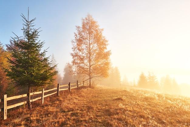 Błyszczące Drzewo Na Zboczu Wzgórza Ze Słonecznymi Belkami W Górskiej Dolinie Pokrytej Mgłą. Darmowe Zdjęcia