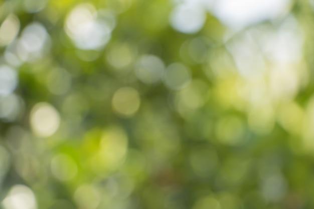 Bokeh Drzewni Liście Dla Natury Tła Premium Zdjęcia