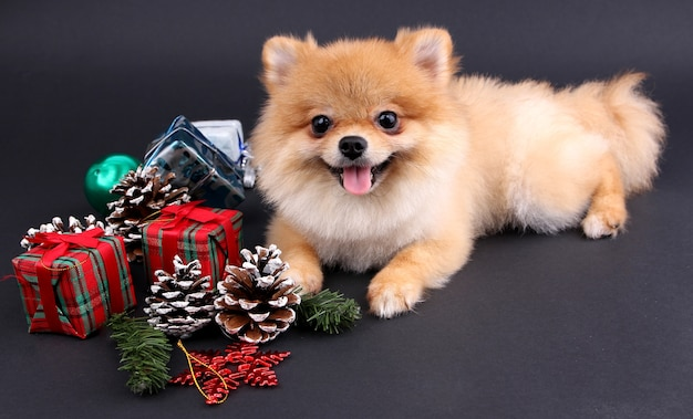 Boże Narodzenie I Pomorskie I Dekoracje Z Czarnym Tłem. Premium Zdjęcia