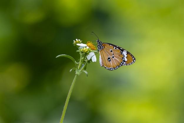 Brązowy I Czarny Motyl Siedzący Na Kwiatku Darmowe Zdjęcia