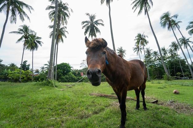 Brązowy Koń Pasący Się Na Trawniku Premium Zdjęcia