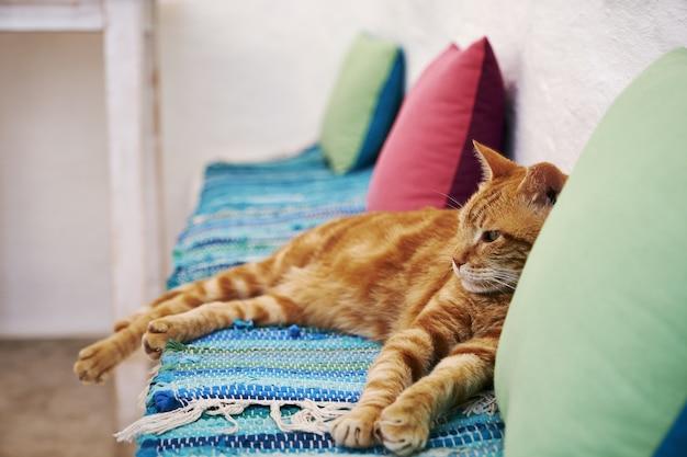 Brązowy Kot Siedzi Na Niebieskim Podłożu Tkaniny W Aegiali, Wyspa Amorgos, Grecja Darmowe Zdjęcia