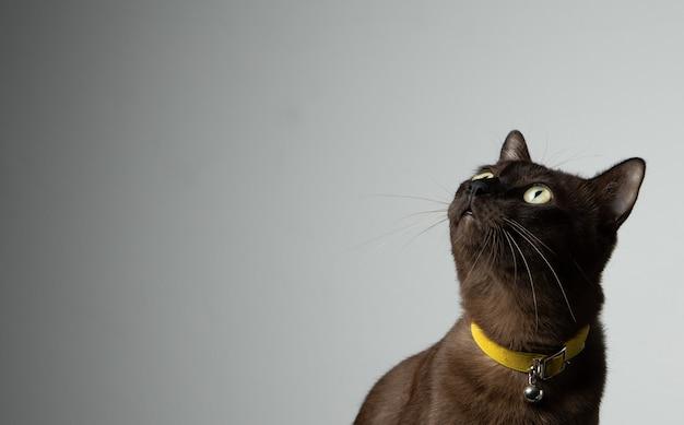 Brązowy Kot Siedzi Premium Zdjęcia