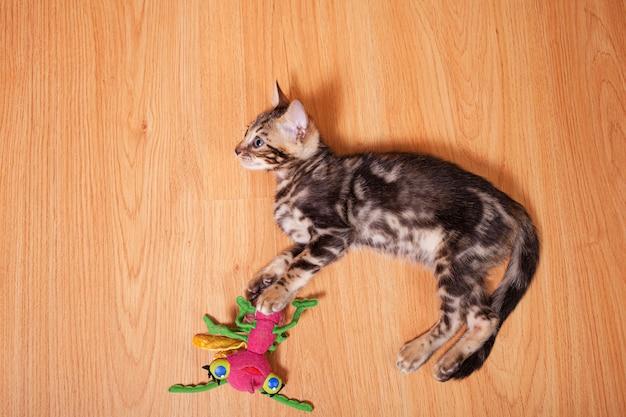 Brązowy Mały Kotek Tygrys Bengalski Leopard Bawić Się W Mieszkaniu Premium Zdjęcia